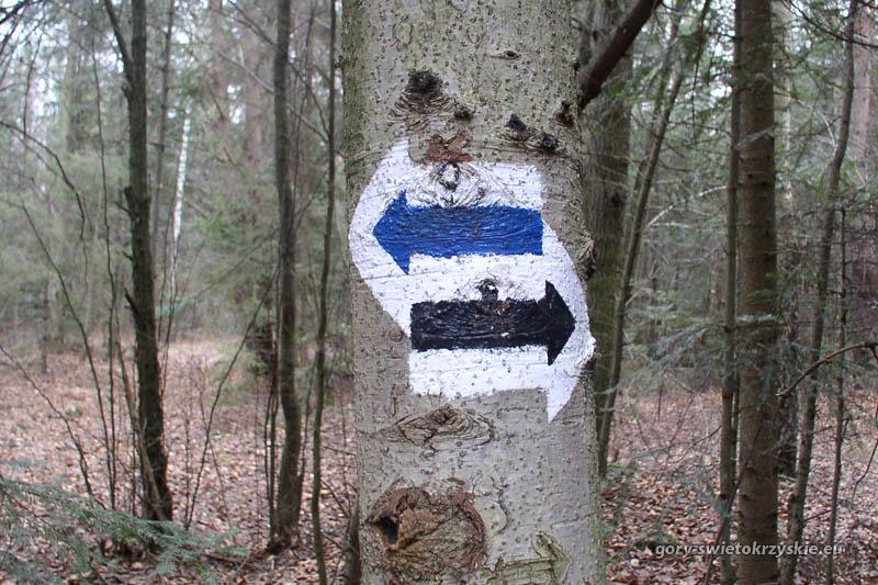 Szlak turystyczny pieszy niebieski i czarny - znak na drzewie