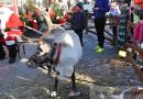 Jarmark Bożonarodzeniowy na kieleckim Rynku [ZDJĘCIA]